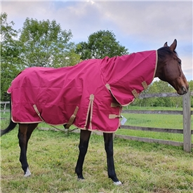 *Summer Turnout Combo Rug