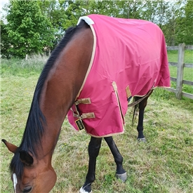 Summer Turnout Standard Neck Rug